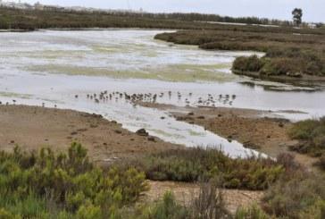 Archivan causa contra 12 cargos por vertidos aguas residuales Marismas de Isla Cristina