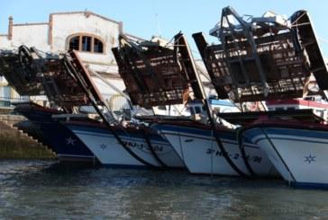 Bruselas confirma que el FEMP respaldará al sector pesquero ante el Covid-19