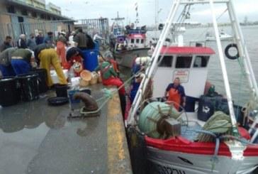 Los barcos isleños de la pesquería del cerco inician dos meses de parada biológica