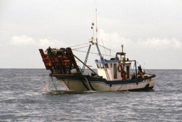 Prorrogan la actividad de la chirla para la flota de Isla Cristina, Punta Umbría y Sanlúcar