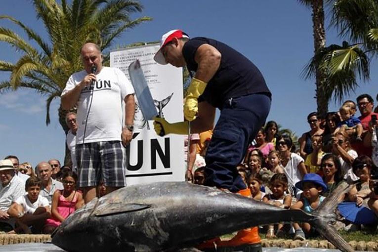 La Asociación de Amigos del Atún Thunnus Thynnus. Necesita de tu voto