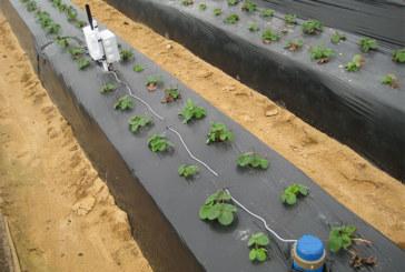 Una finca de La Redondela logra optimizar el agua en un 36% gracias al proyecto Ferdoñana