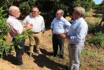 Isla Cristina: La Junta apoya al sector de los cítricos con más de 40 variedades