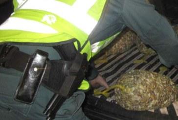 Incautación de 24 rastros y 400 kilogramos de coquinas
