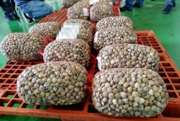 Salud prohíbe la venta de moluscos en la lonja de Isla