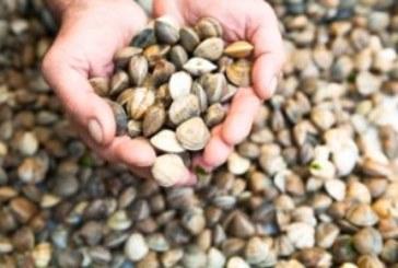 BOJA publica la modificación de las zonas de producción de moluscos bivalvos en Andalucía