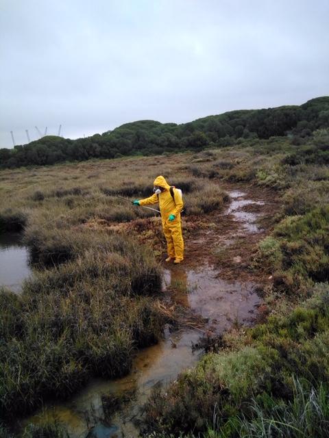 Intensifican la lucha contra la invasión de mosquitos en marismas mareales de Isla Cristina