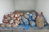 Inspección interviene 280 kilos de coquinas con toxinas en Isla Cristina