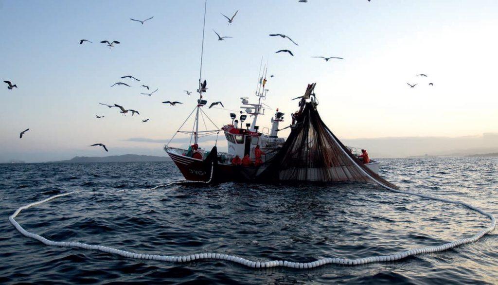 La flota de cerco de la pesca de la sardina considera