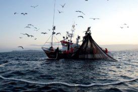 Las cofradías alertan del riesgo de extinción de la flota española