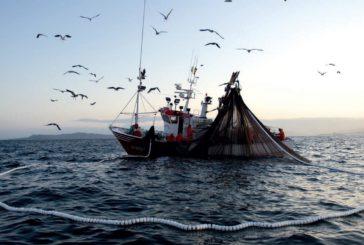 El sector pesquero de Isla Cristina registra pérdidas con el temporal por los problemas en el transporte