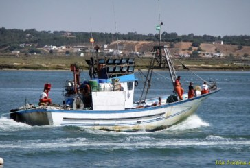 Hasta 2.500 toneladas de sardina se podrá capturar en el Golfo de Cádiz