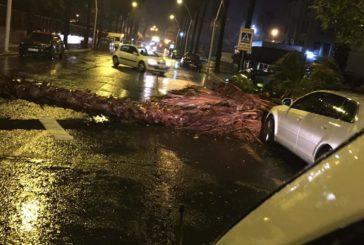 La borrasca Bárbara deja un reguero de coches destrozados, árboles caídos y daños en Isla Cristina.