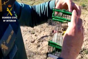 Investigan a dos personas tras ser sorprendidas cazando aves en las marismas de Isla Cristina