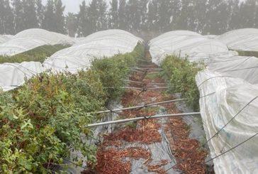 Los últimos tornados provocaron daños a un total de 65 explotaciones agrícolas en la provincia de Huelva