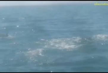 Delfines Pescando en la costa de Isla Cristina