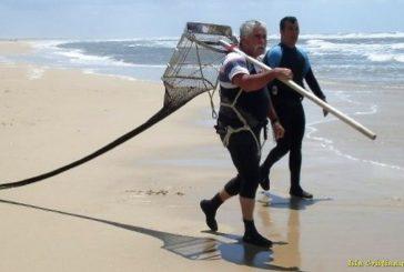 Los mariscadores artesanales agradecen a la Junta la reducción de la veda de la coquina