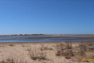 Playas para Perros de Isla Cristina: La Gola & Pesmar
