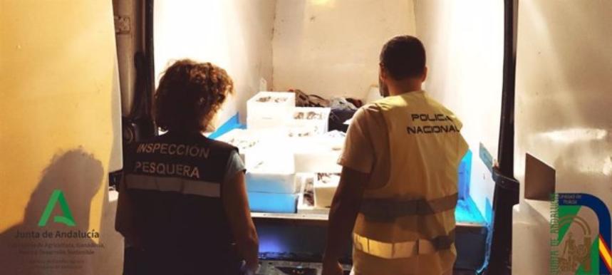 Inspección Pesquera y Policía Autonómica decomisan 120 kilos de pijotas o merluza inmadura en Huelva