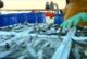 Balance positivo de la campaña de la sardina en Isla Cristina