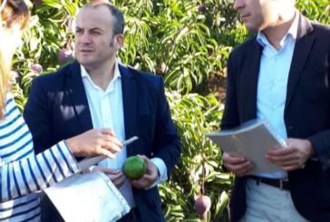 CS Isla Cristina alerta sobre los efectos nocivos para la salud del consumo de fruta robada